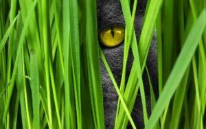 Cat grass for good nutrition in pet food