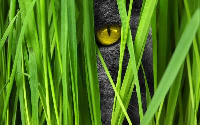 Cat grass as good nutrition