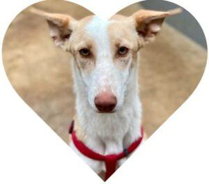Firulais looking for forever home