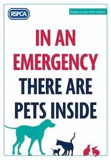 Welfare charity pets inside poster