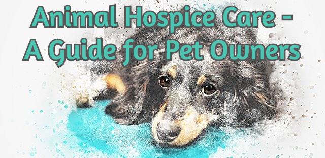 Animal Hospice Care