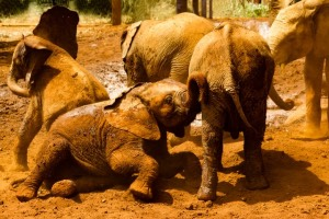 Animals and travel with baby elephants