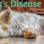 Cushing's Disease in Dogs - Recognise the symptoms