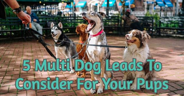 5 Multi Dog Leads To Consider For Your Pups