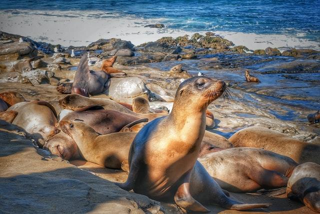 Marine Big 5 - cape fur seals