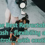 The Best Retractable Leash - flexibility and control... with caution!