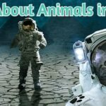 Facts About Animals in Space