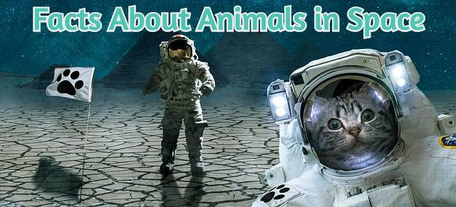 facts-about-animals-space