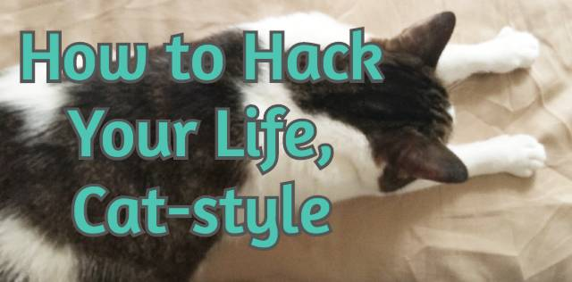 How to Hack Your Life, Cat-style