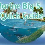 Marine Big 5 -  A Quick Guide