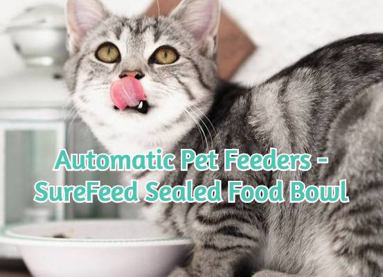 photo-of-cat-pet-feeding