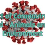 The Effect of Coronavirus on the World - Animals and the Environment