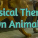 Physical Therapy On Animals
