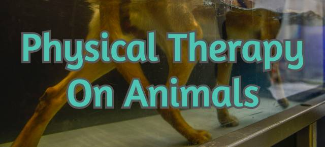 physical-therapy-on-animals