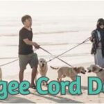 The Bungee Cord Dog Leash