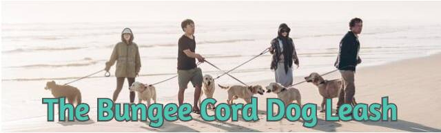 the-bungee-cord-dog-leash