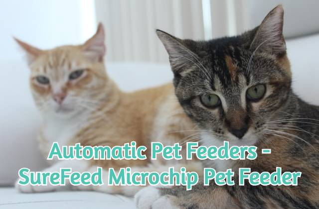 two-cats-looking-at-an-automatic-pet-feeder