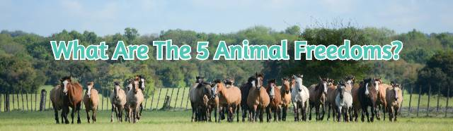 What Are The 5 Animal Freedoms?
