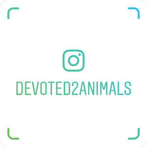 devoted2animals_nametag