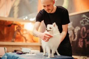 dog-grooming-tips-for-beginners-groomer