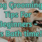 Dog Grooming Tips For Beginners - It's Bath time!