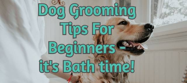 dog grooming tips for beginners - it's bathtime