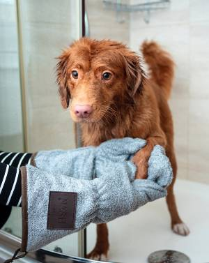 dog-grooming-tips-for-beginners-toweldry