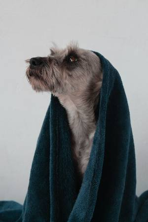 dog-grooming-tips-for-beginners-toweldry2