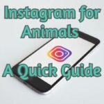 Instagram for Animals - A Quick Guide