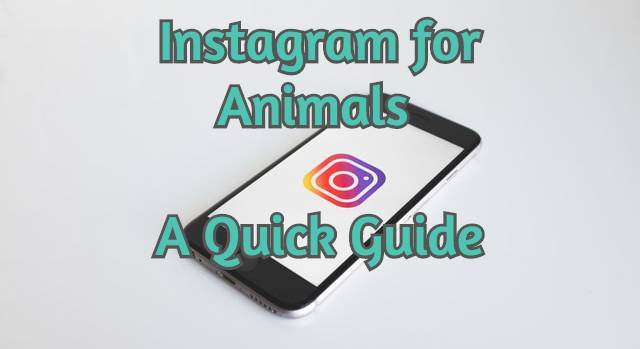 instagram-for-animals-feature