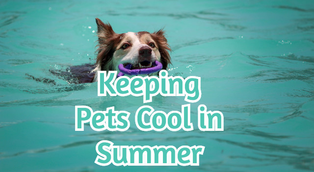 Keeping Pets Cool in Summer