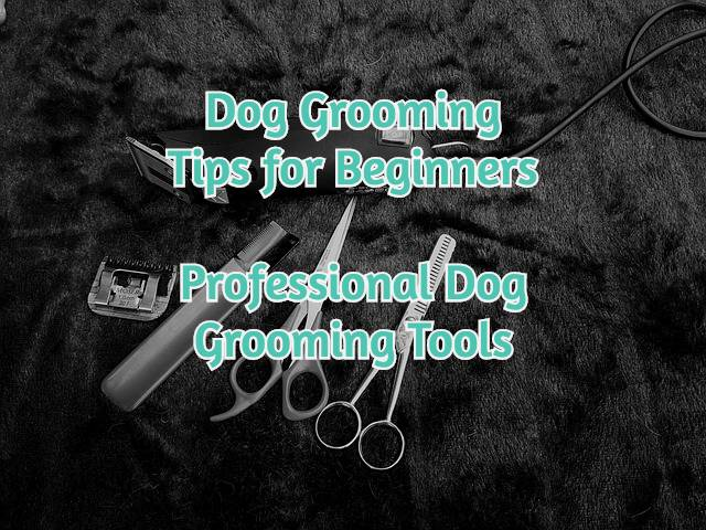 professional-dog-grooming-tools-feature