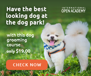 Animal Grooming - Dog in the Park - 19 USD