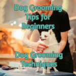 Dog Grooming Tips For Beginners - Dog Grooming Techniques