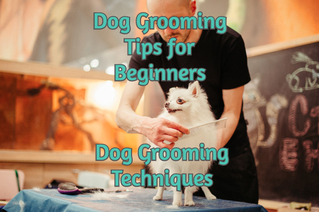 grooming_tips_for_beginners_dog_grooming_techniques