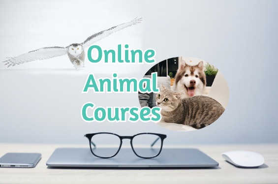 online-animal-courses