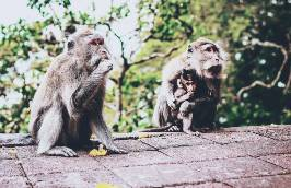 what_is_myiasis_in_animals_your_guide_to_flystrike_baboons