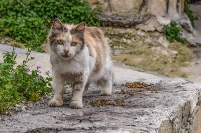 what_is_myiasis_in_animals_your_guide_to_flystrike_street_cat