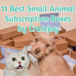 11 Best Small Animal Subscription Boxes by Cratejoy
