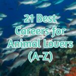 21 Best Careers for Animal Lovers  (A-Z)