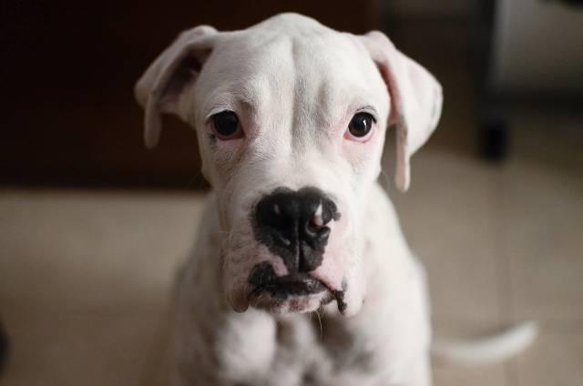 cool-albino-animals-albino-dog