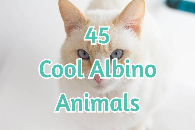 45 Cool Albino Animals
