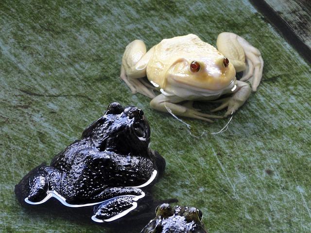 cool-albino-animals-albino-frog