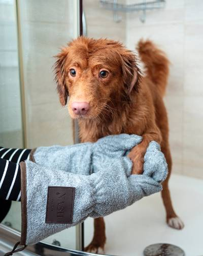 dog-grooming-tips-for-beginners-pet-hair-care-products-dog-towelled
