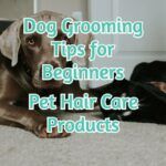 Dog Grooming Tips For Beginners - Pet Hair Care Products