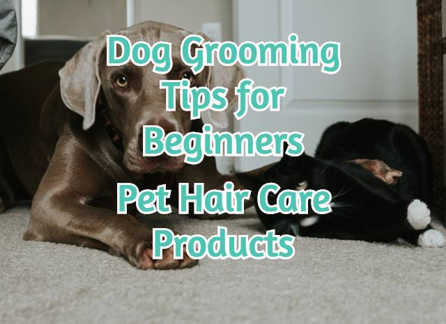 dog-grooming-tips-for-beginners-pet-hair-care-products-feature